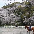 馬術練習場の春