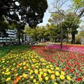 春の横浜公園