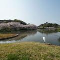Photos: 春の三渓園