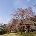 春の鶴翔閣