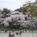 Photos: 馬術練習場の春