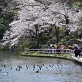 三渓園の春