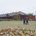 Photos: 花と赤レンガ倉庫