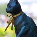 大佛次郎館の猫