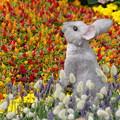 花壇のウサギ