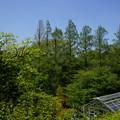 春の横浜市こども植物園
