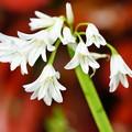 Photos: 春の花