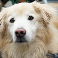 Photos: 大人しい犬