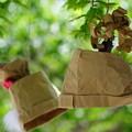 Photos: 紙の帽子