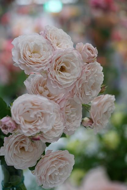花ぼんぼり