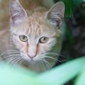 Photos: 草むらの野良猫