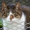Photos: ウインク猫