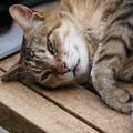 寝そべる野良猫