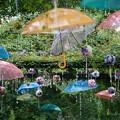 Photos: 紫陽花祭り