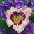 Photos: 紫陽花とヘメロカリス