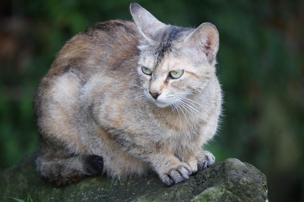 石の上の猫
