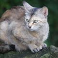 Photos: 石の上の猫