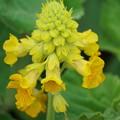 Photos: 野菜の花