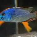 アフリカの魚