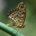Photos: 蝶の休息