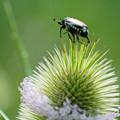Photos: 小さな昆虫