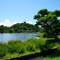 Photos: 夏の三渓園