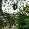 Photos: 温室