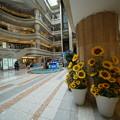 羽田空港の向日葵