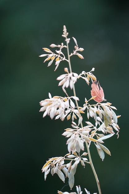 薬草園の花