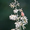 Photos: 薬草園の花