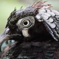 Photos: 鳥