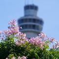 Photos: タワーとノウゼンカズラ
