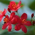 Photos: 温室の花