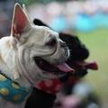 Photos: 舌出す犬