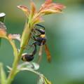 Photos: スリムな蜂