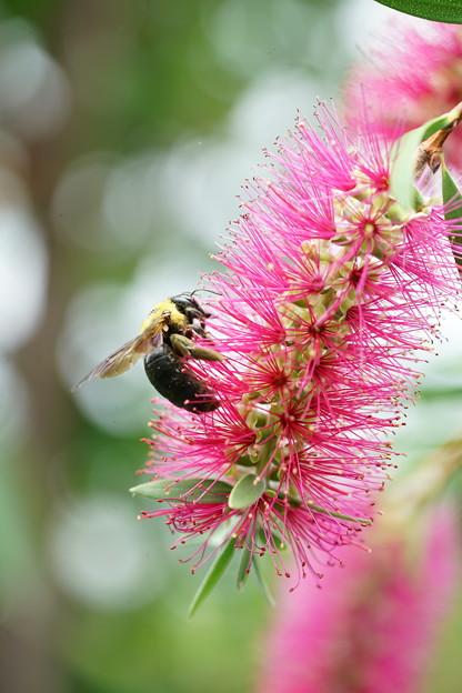 ブラシとクマバチ