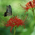 Photos: 花と蝶