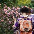 Photos: 和服と薔薇