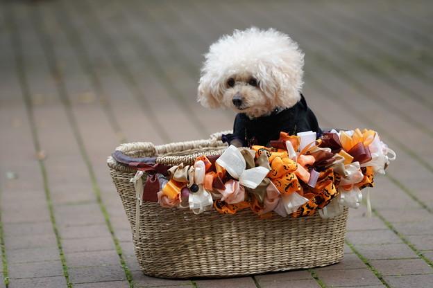 ハロウィン犬