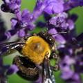 Photos: 花と蜂