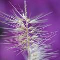 Photos: 植物