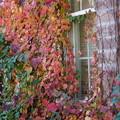 Photos: 秋色の窓
