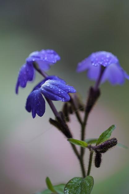 雨の日の花