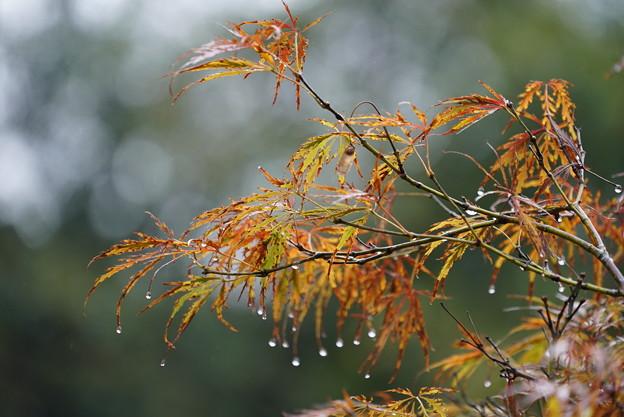 雨の日葉の葉