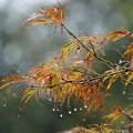 Photos: 雨の日葉の葉