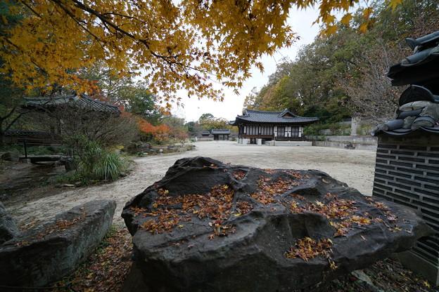 Photos: 初冬のコリア庭園