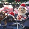 クリスマス犬