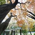 初冬の三ッ沢公園