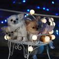 Photos: ピッツ犬
