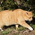 Photos: 野良猫